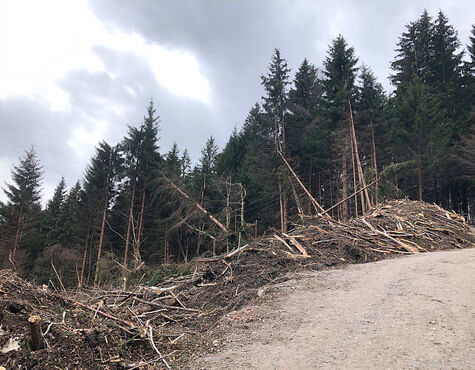 In österreich Stirbt Seit 1980 Immer Mehr Wald Salzburg24