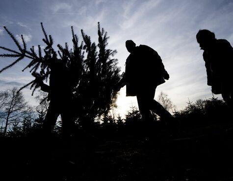 Weihnachtsbaum Ab Wann.Weihnachtsbaum Vergleich Preisunterschiede Bis Zu 400 Prozent In